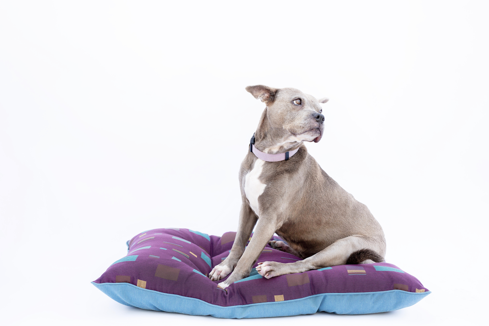 The Ramona by Pet Poufs